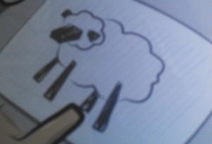 Sheep1a